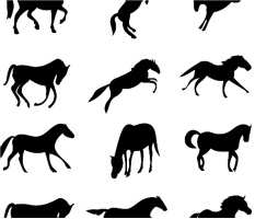 "Horses Car Magnet 14""W x 12""H"