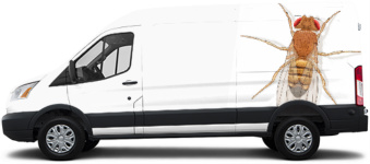 028d95a54f Truck Wrap · Transit Van Wrap